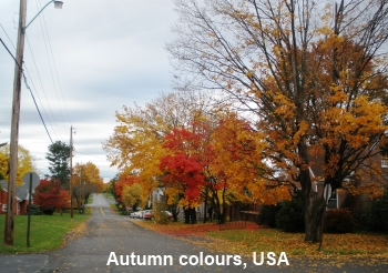 Autumn colours